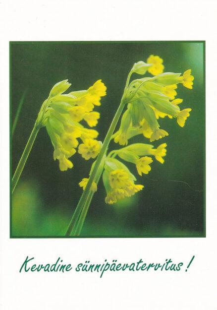 Postkaart-Kevadine-sünnipäevatervitus