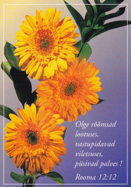 Postkaart-Olge-rõõmsad-lootuses